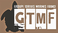 Groupe tortues marines France