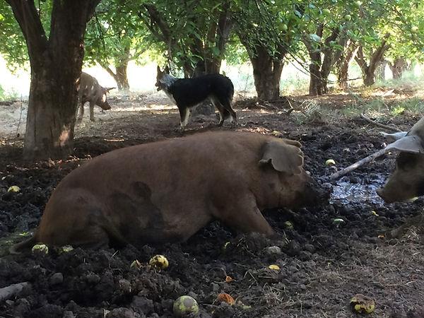 pastured pork non-gmo soy-free organic local arizona