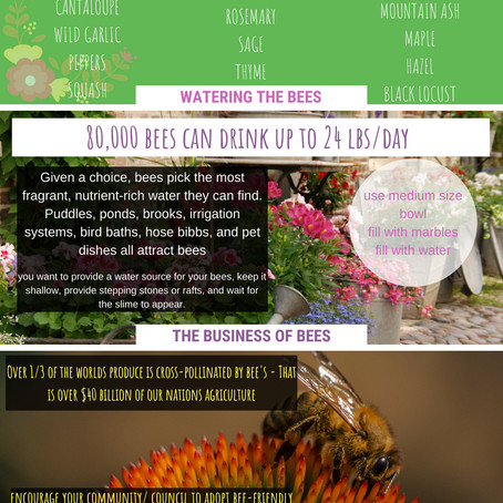 4 Easy Tips to Help the Bees!