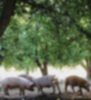 pork pastured ethical humane animal welfare organic soy-free gmo-free