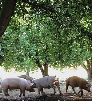 pork pastured ethical humane animal welfare organic soy-free gmo-free
