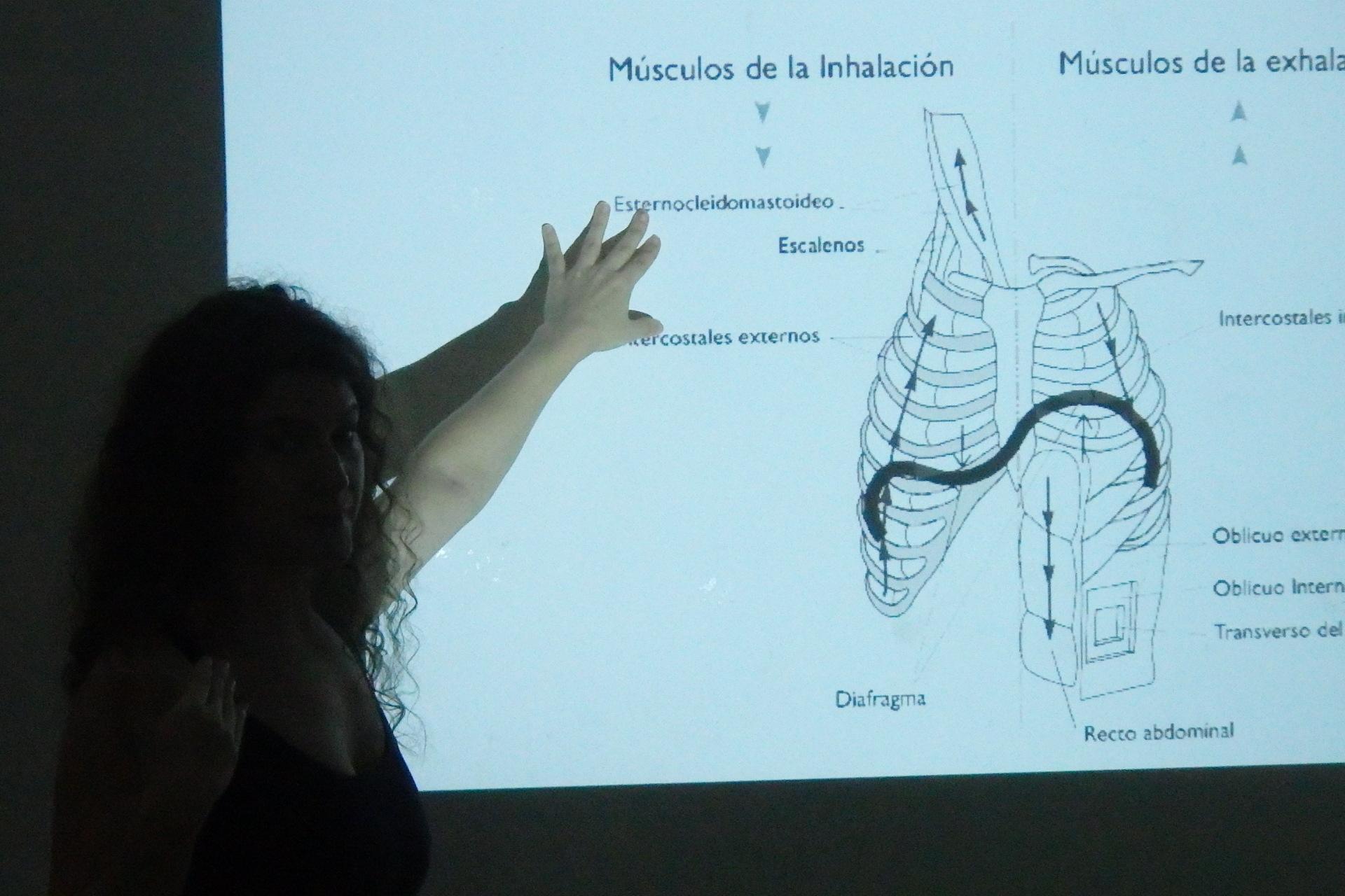Músculos del aparato respiratorio