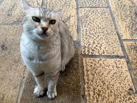 החתולים של העיר העתיקה