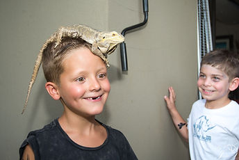 AA lizard on head.jpeg