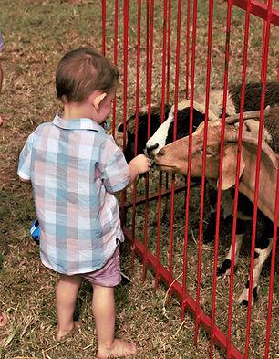 feeding animals.jpg