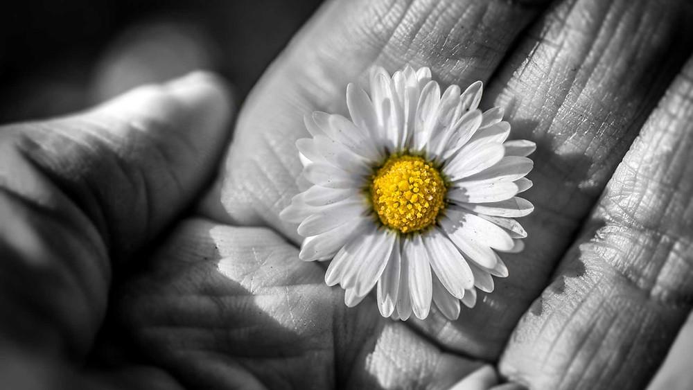 flor na mão