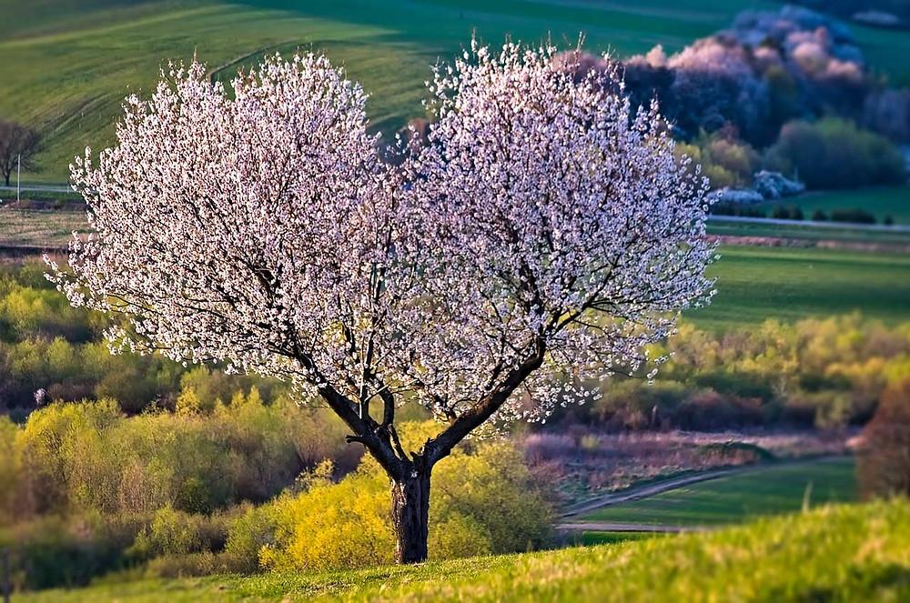 árvore em formato de coração e pulmão amor