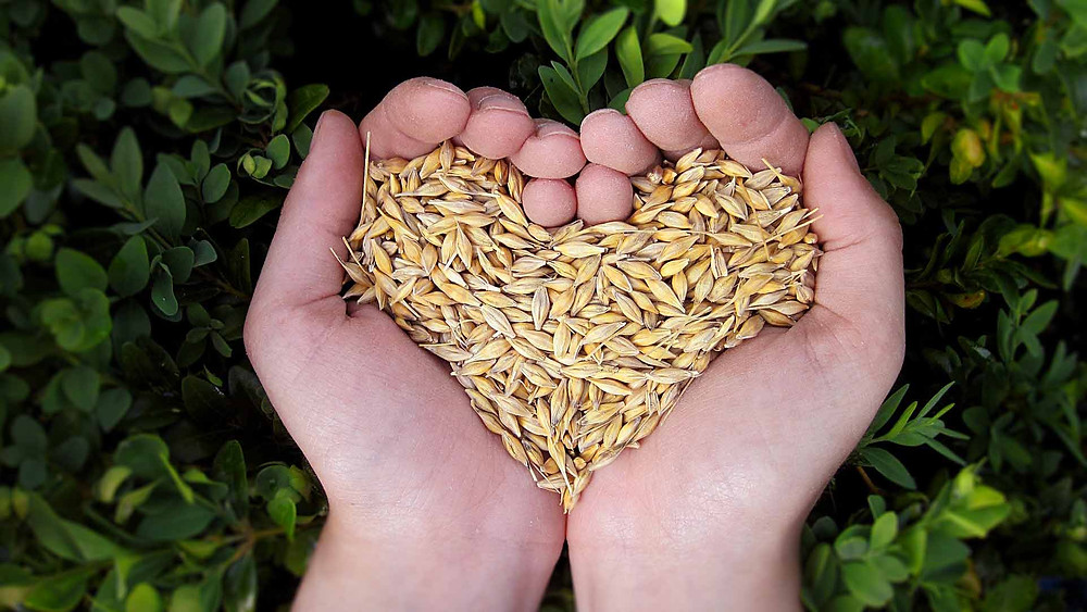mãos unidas carregando sementes em formato de coração