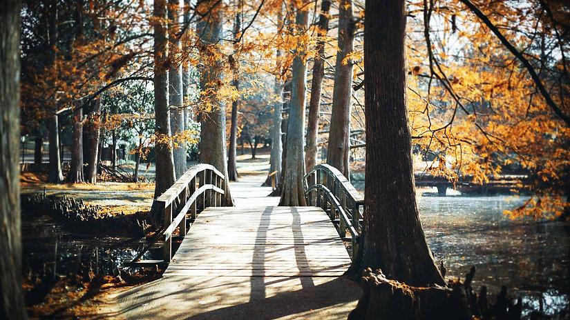 ponte natural no parque