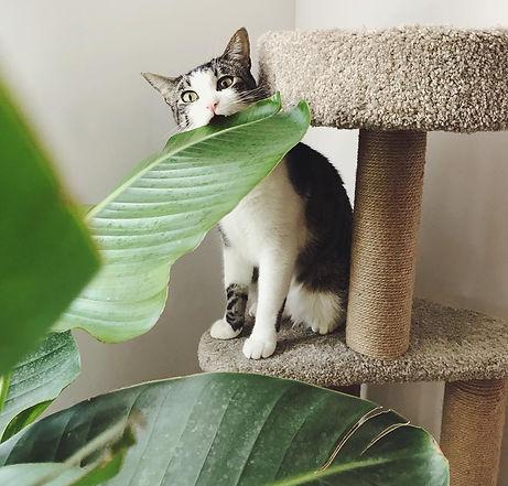 Cat biting a plant