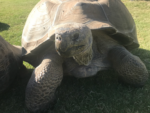 Postcards from a tortoise ranch