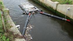 Bandalong Litter Trap
