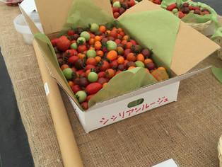 宝石箱のトマト。