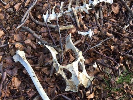 Bone Collecting