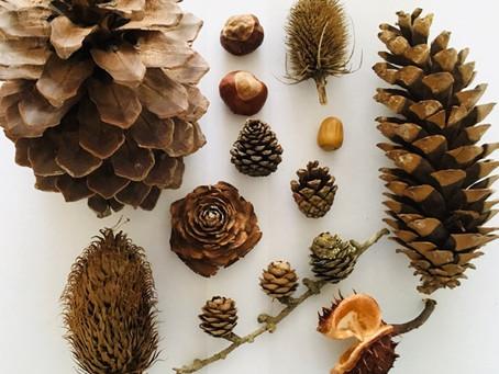 Bones, feathers and cones.