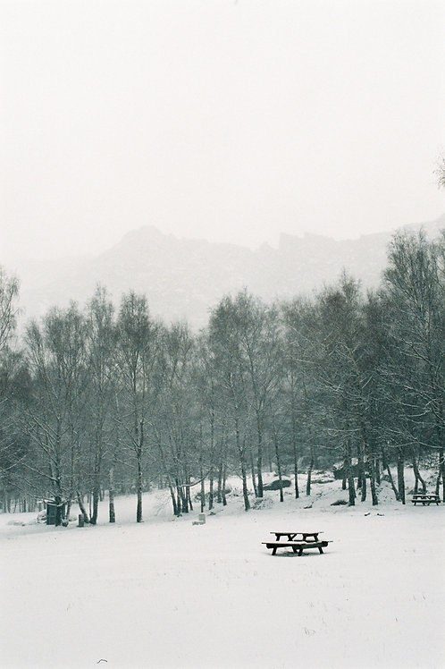 Bench in the Snow Photography