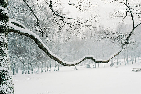 Snow Branch Photography