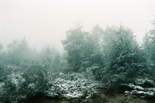 Foggy Nature Photography