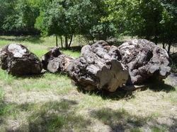 Mesquite, burl logs2071.jpg