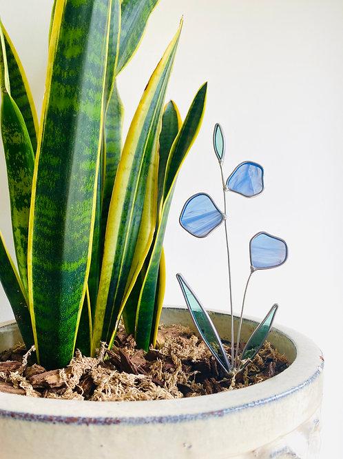 Chicory Botanical Stakes