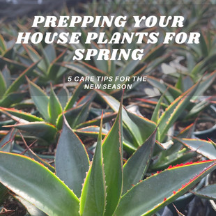 Prepping your House Plants for Spring: 5 Care Tips for the New Season