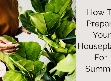How To Prepare Your Houseplants For Summer: Our Top 6 Tips