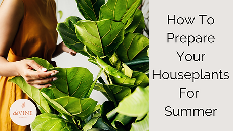 How To Care For Your Housplants In the S