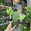 Thumbnail: Opuntia Cactus