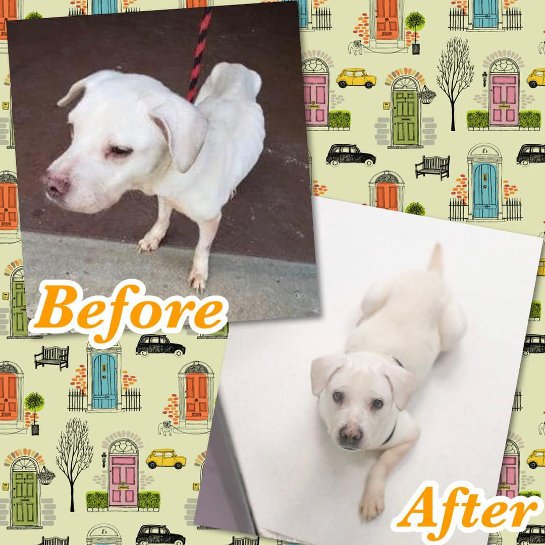 Dog gets healthy at Hope for Life