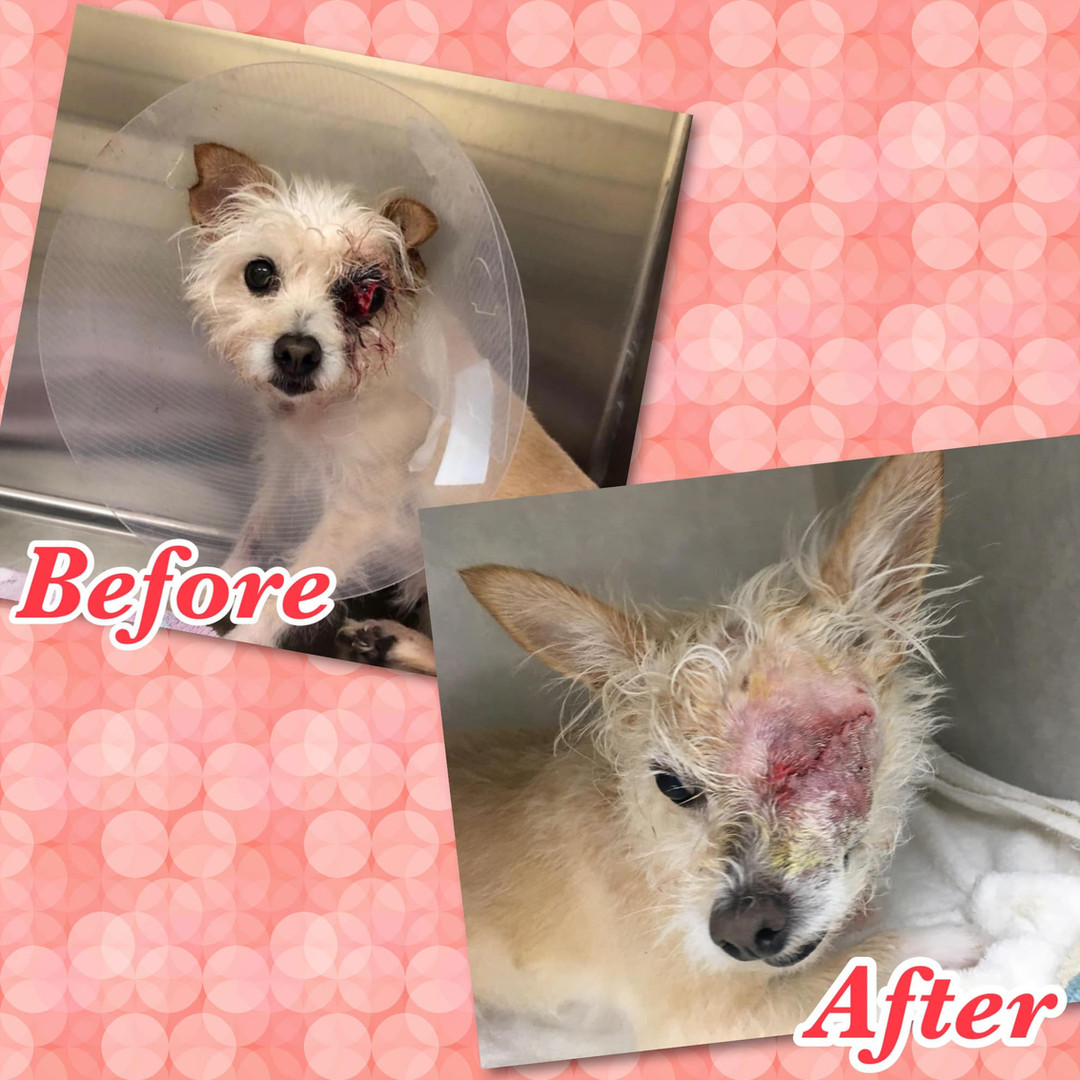 Dog before and after surgery at Hope for Life