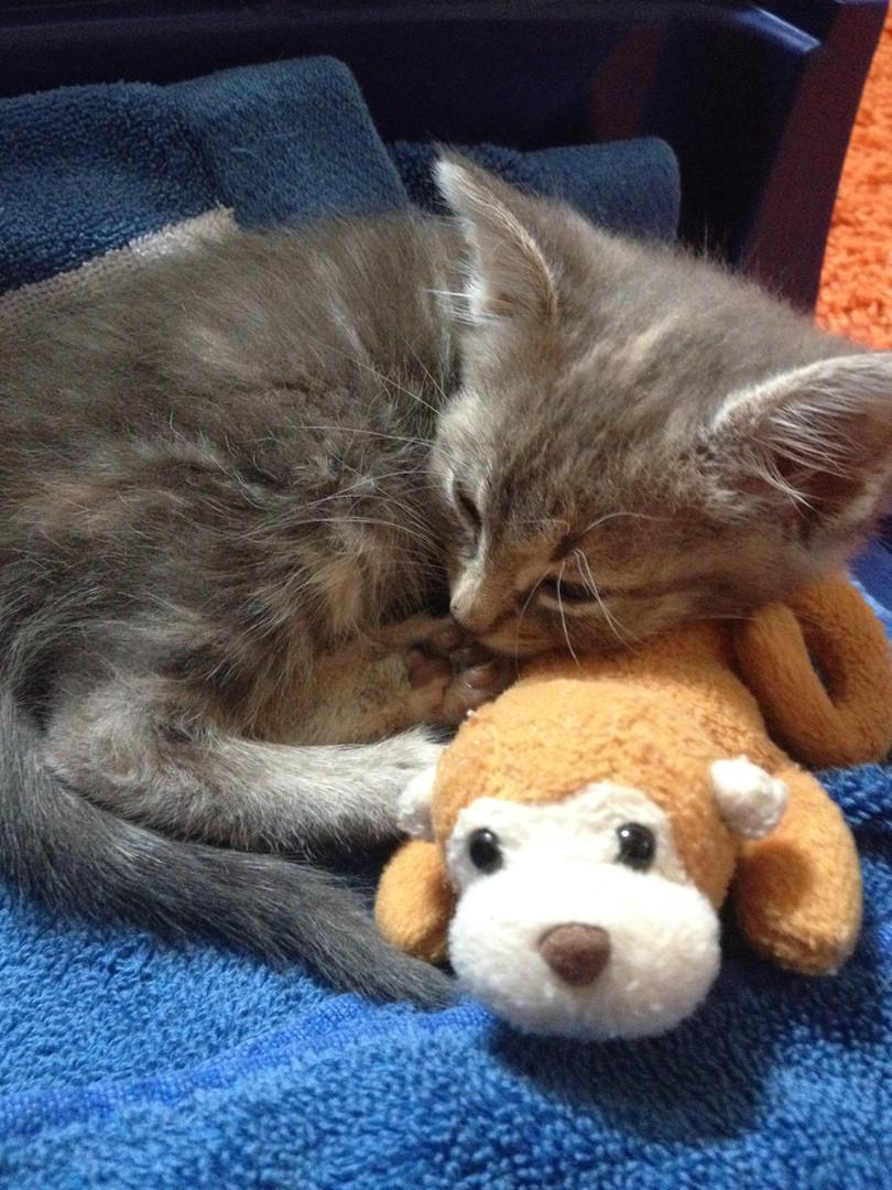 Hope for Life Rescue kitten