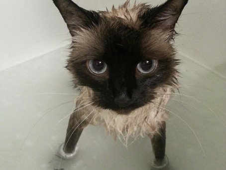 Need a Cat in a Bathtub?