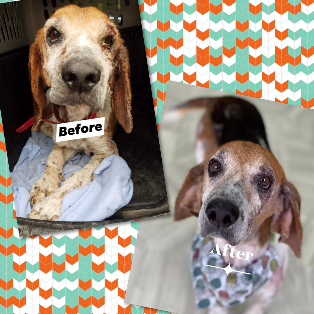 Dog before and after picture