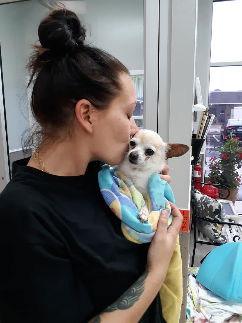 A dog gets adopted at Hope for Life Rescue