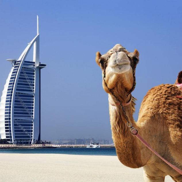 explore UAE with us
