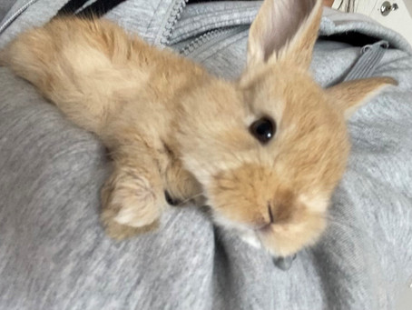 About Raising Rabbits And Breeds