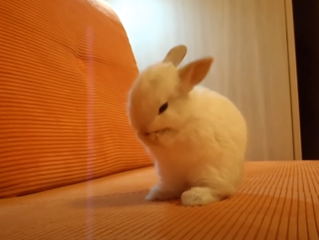 What Does My Rabbit's Behaviour Mean?