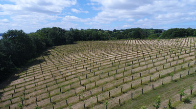 Les plantations du Parc