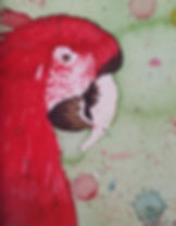 perroquet masbath