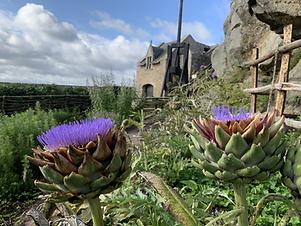 artichaut barbacane chateau de la Roche Goyon Fort La Latte.HEIC