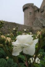 les cuises de nymphe dans le jardin du château