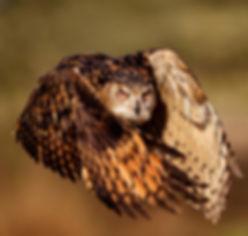 Falcon temporis Ioann Latcha