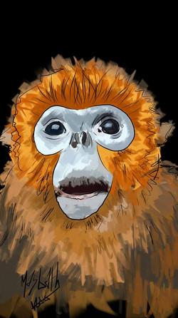 monkey masbath