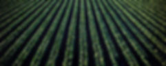 agriculture-background-bright-974316.jpg