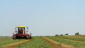 A natureza humana cultivada pela agricultura
