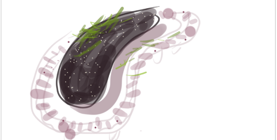 Ink pasta dough with filling and sliced pickles, on ceramic plate  2019  Digital drawing