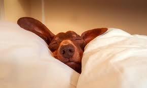The importance of a good night's sleep