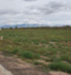 View from Mesilla Vineyards Estates