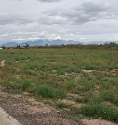 View from Mesilla Vineyards Estates