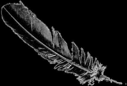 5224035_raven-feather-erin-wasson-feathe